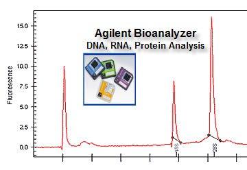 pbrc gcf agilent 2100 bioanalyzer rh gcf pbrc edu